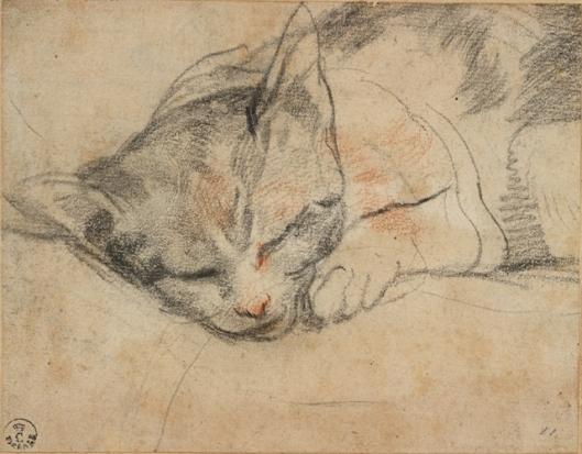Federico Barocci Study for a cat Gabinetto Disegni e Stampe degli Uffizi