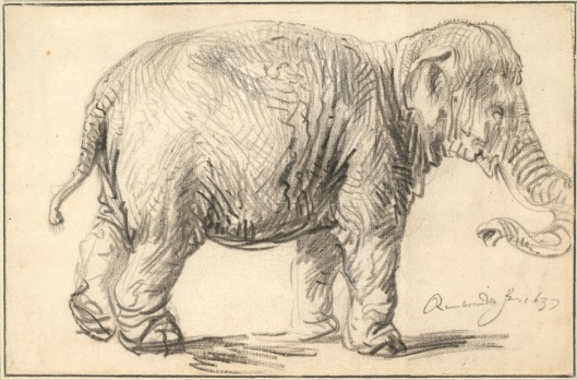 Rembrandt Harmenszoon van Rijn Elephant 1637 Albertina