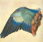 Albrecht Dürer Left Wing of a Blue Roller ca 1500 or 1512 Albertina