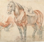 Peter Paul Rubens Saddled Horse ca 1615 18 Albertina