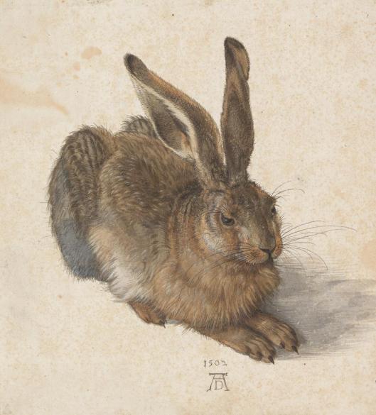 Albrecht Dürer Hare 1502 Albertina