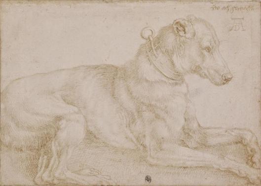 Albrecht Dürer A Dog Resting recto 1520 silverpoint BM London
