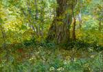 Vincent van Gogh Undergrowth 1887 Centraal Museum, Utrecht loan from Stichting Van Baaren Museum